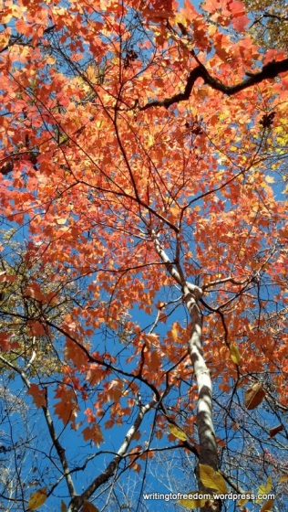 Giving thanks, Thanksgiving, gratitude