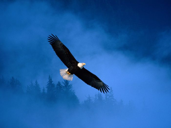 Flight of Freedom- hdwallpapers