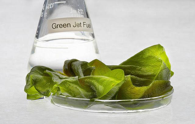 Algae fuel- Sapphire Energy