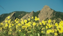 meadows by flatirons
