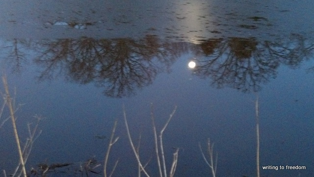 Winter Reflections, poetry