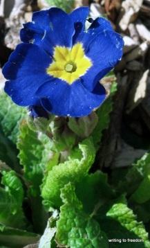 spring flowers, poem