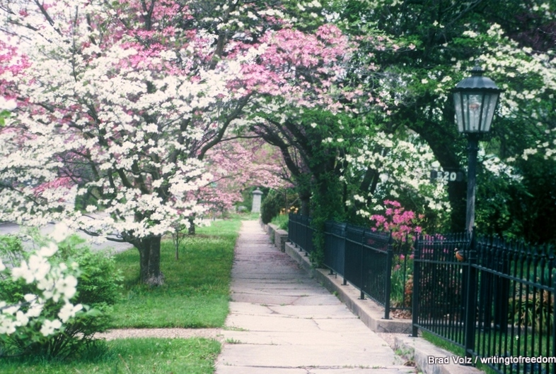 Earth Day, Celebrate Nature, poetry