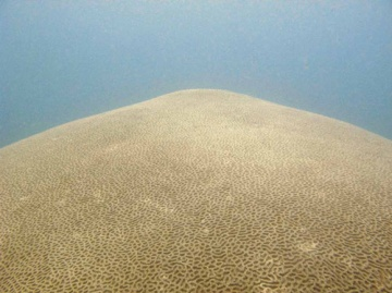 Brain Coral, Awesome Stories