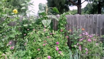 my humble garden