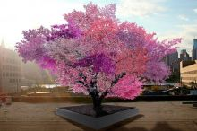 40 Fruits Tree, Awesome Stories