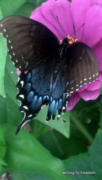 butterfly, garden, poetry