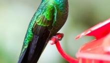 Hummingbird Shuffle, poetry