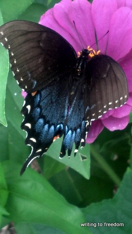 butterfly, poetry, haiku