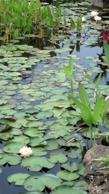 grace, botanical gardens