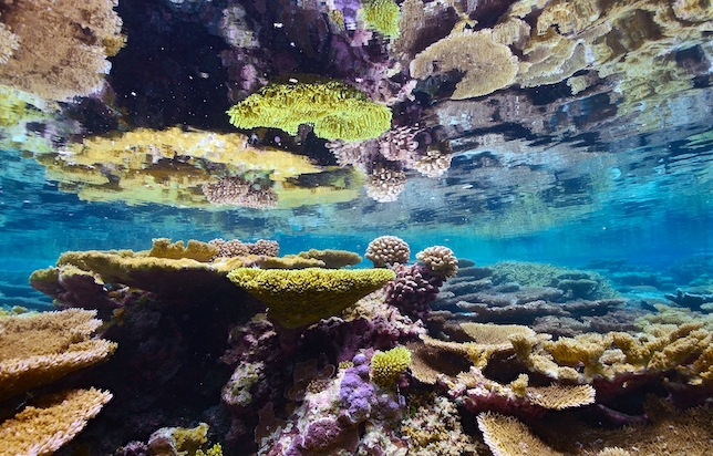 Pacific Ocean reserve, Awesome Stories