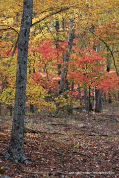 fall colors, poetry, gratitude