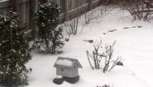 Snowy Dreams, poetry