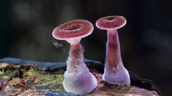 mushrooms, poetry, magic