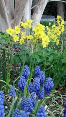 spring, joy, flowers