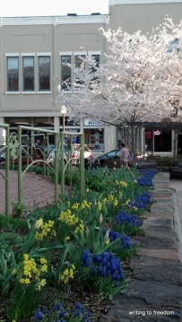 flowers, Fayetteville Square