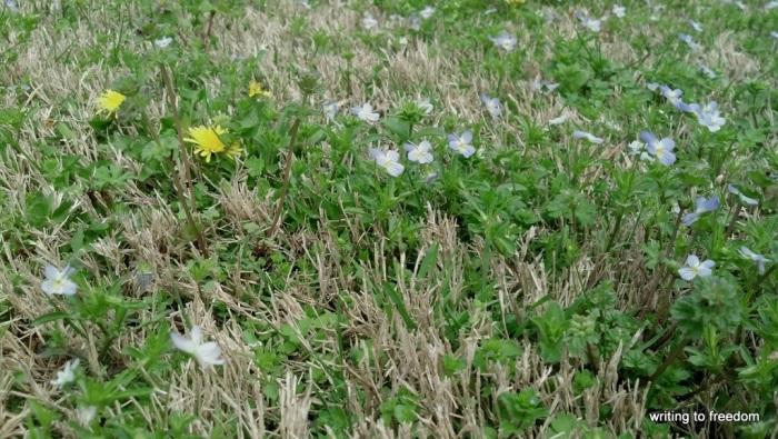 yard, flowers,