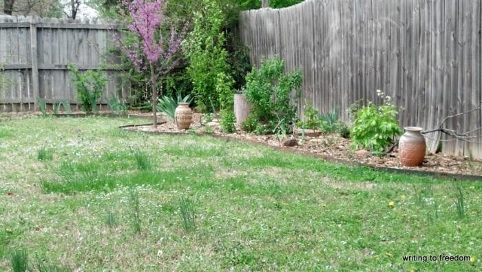 yard, spring flowers