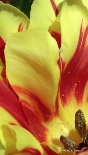 joy, spring flowers