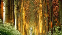 Magical paths, Awesome Stories