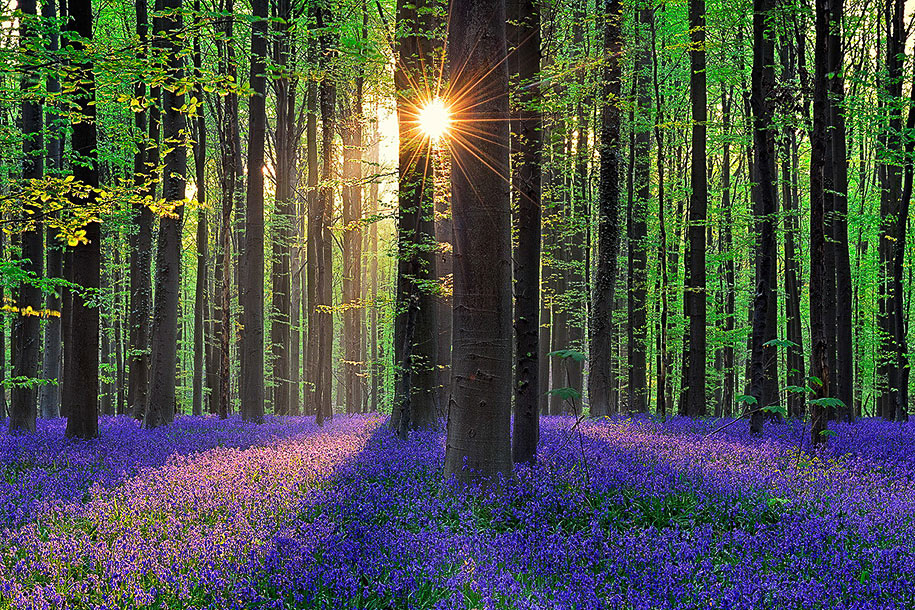 Image result for mindfulness in forests
