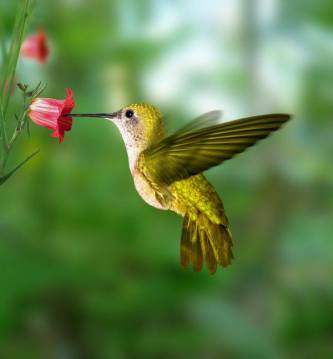 hummingbird, poem, joy