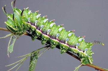 caterpillars, Awesome Stories