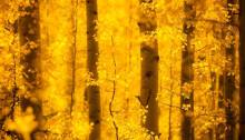 Fall in Aspen, CO, poetry