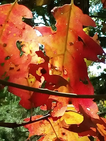 fall colors, poetry