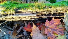 autumn, colors, beauty, poetry, spirit