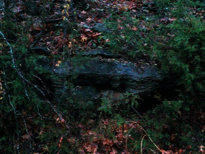 Forest Follies
