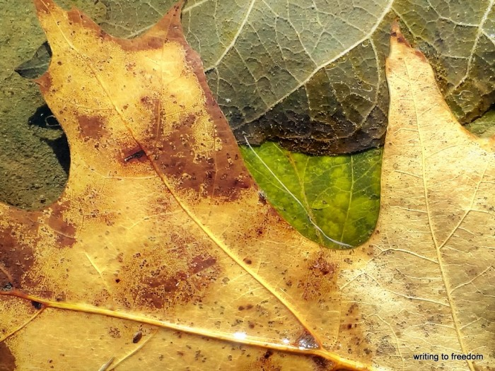 leaf, love, poetry