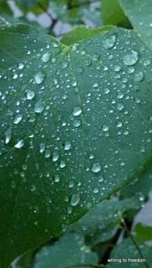 poetry, rain, love
