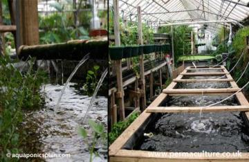 aquaponics, Awesome Stories