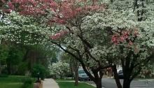 spring, poetry, joy