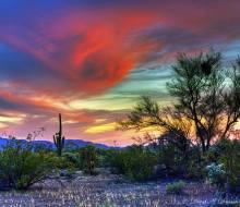Arizona Beauty, poetry