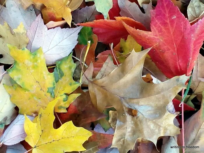 autumn colors, leaves, beauty