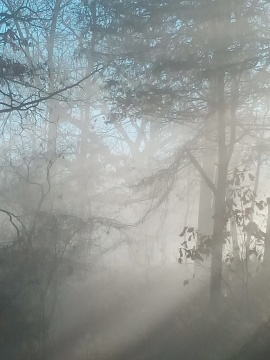 mist, mystery, poetry