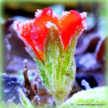 beauty, love, ice, poetry