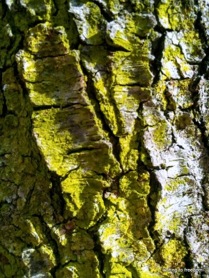 poetry, lichen,