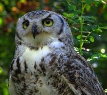 wisdom, owl, Cindy Knoke