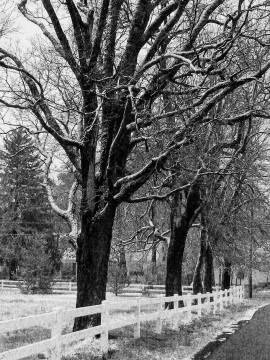 snow, poetry, grace