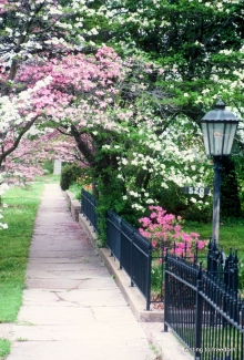 dogwoods, spring, poetry