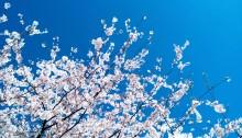 spring, sunshine, poetry
