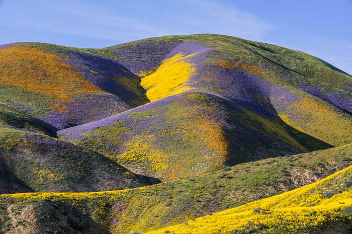 super bloom, Awesome Stories