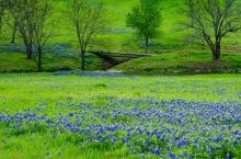Bluebells, poetry