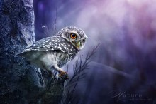 owls, Awesome Stories