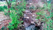 spring, creek, poetry