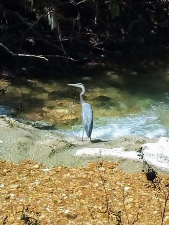 heron, poetry