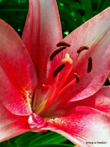 lilies, poetry, love